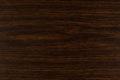 WDDB01 Dąb Bagienny Swamp Oak